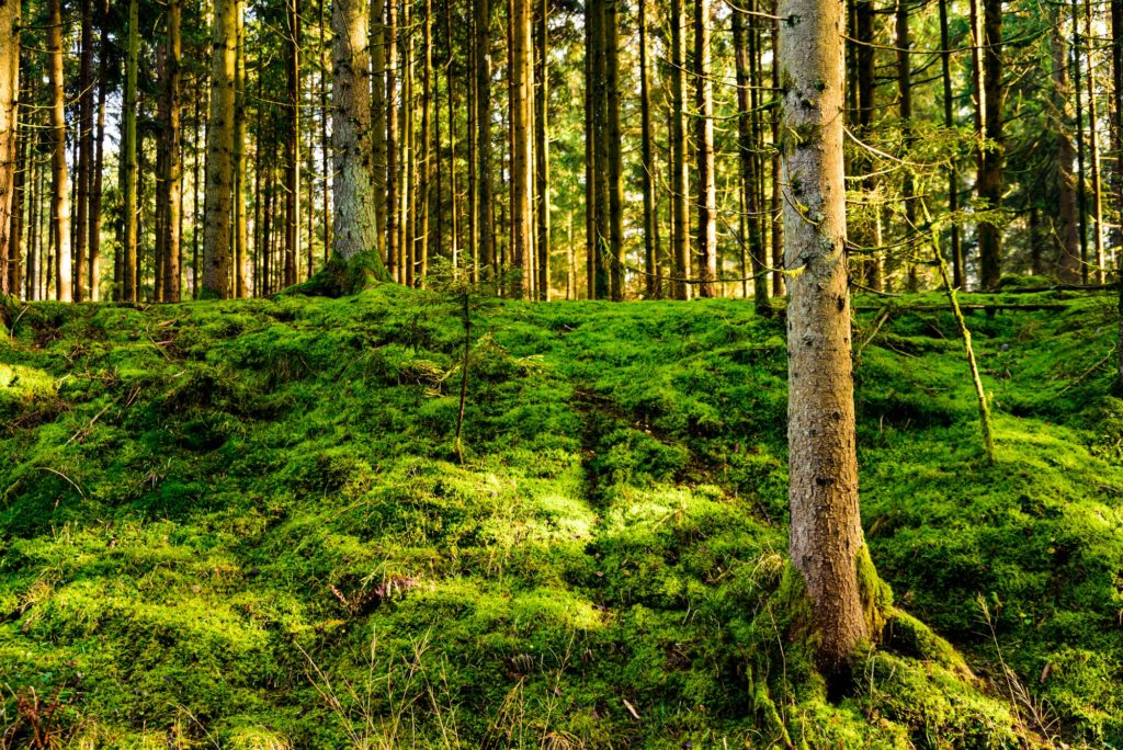 Panorama of beautiful green forest with green moos